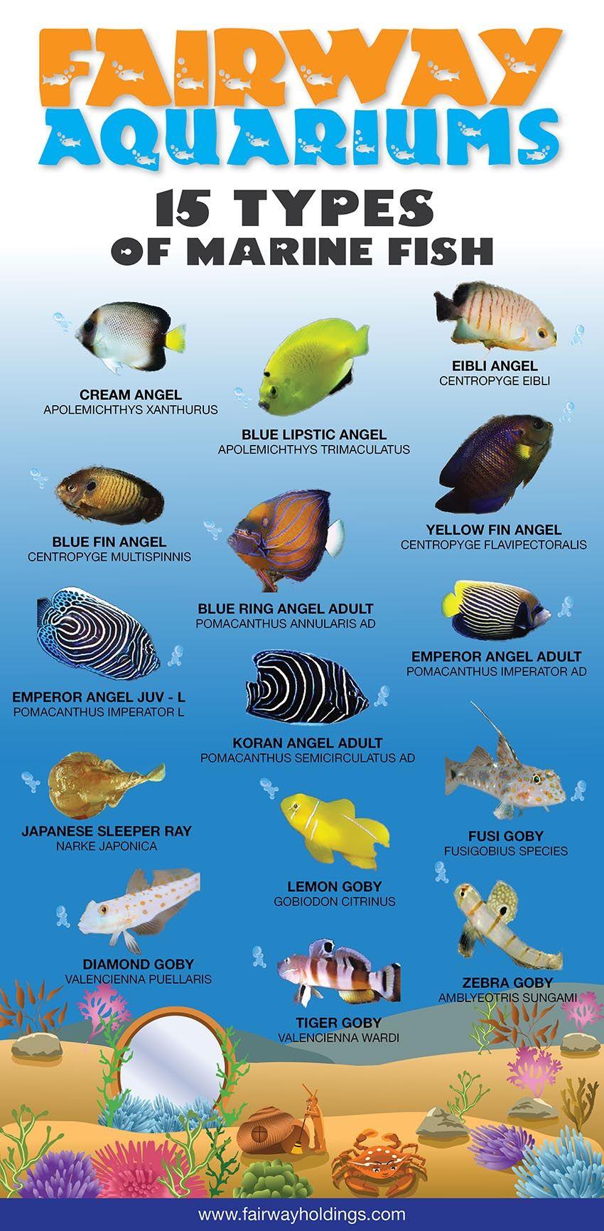 Aquarium fish tank sri lanka - Fish
