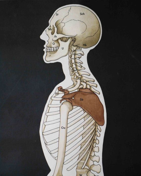 Vintage School Wall Pull Down Chart Map of the Mensch/Human Skeleton ...