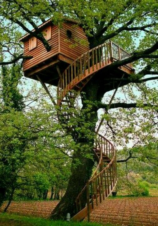 Fancy Tree House What A Spiral Staircase Beautiful Tree Houses Tree House Diy Cool Tree Houses