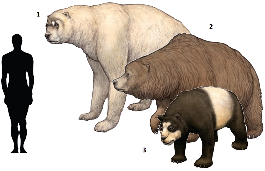Short Faced Bear Size