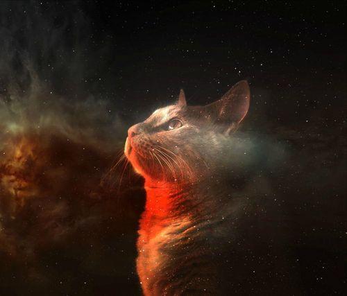 Cat Space Wallpaper