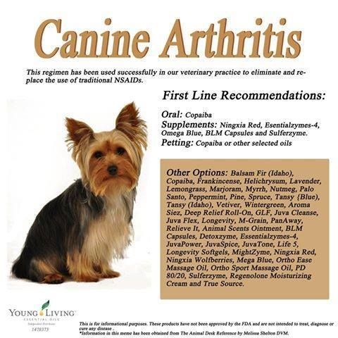 Young Living Essential Oils Canine Arthritis Essential