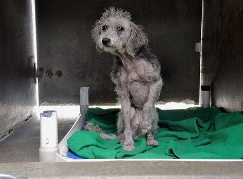 Neglected young dog urgently needs rescue and medical care-slide0