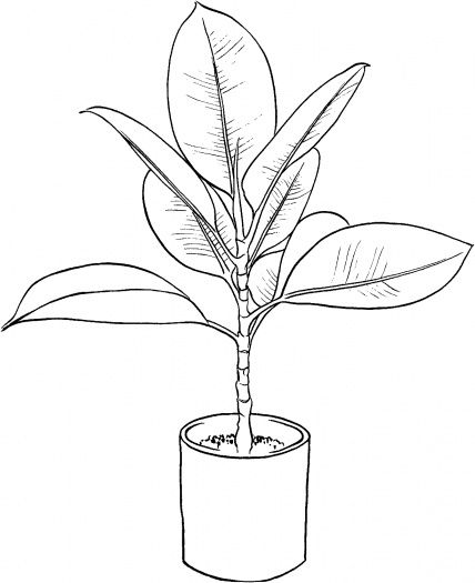 Ficus coloring page | Free Printable Coloring Pages