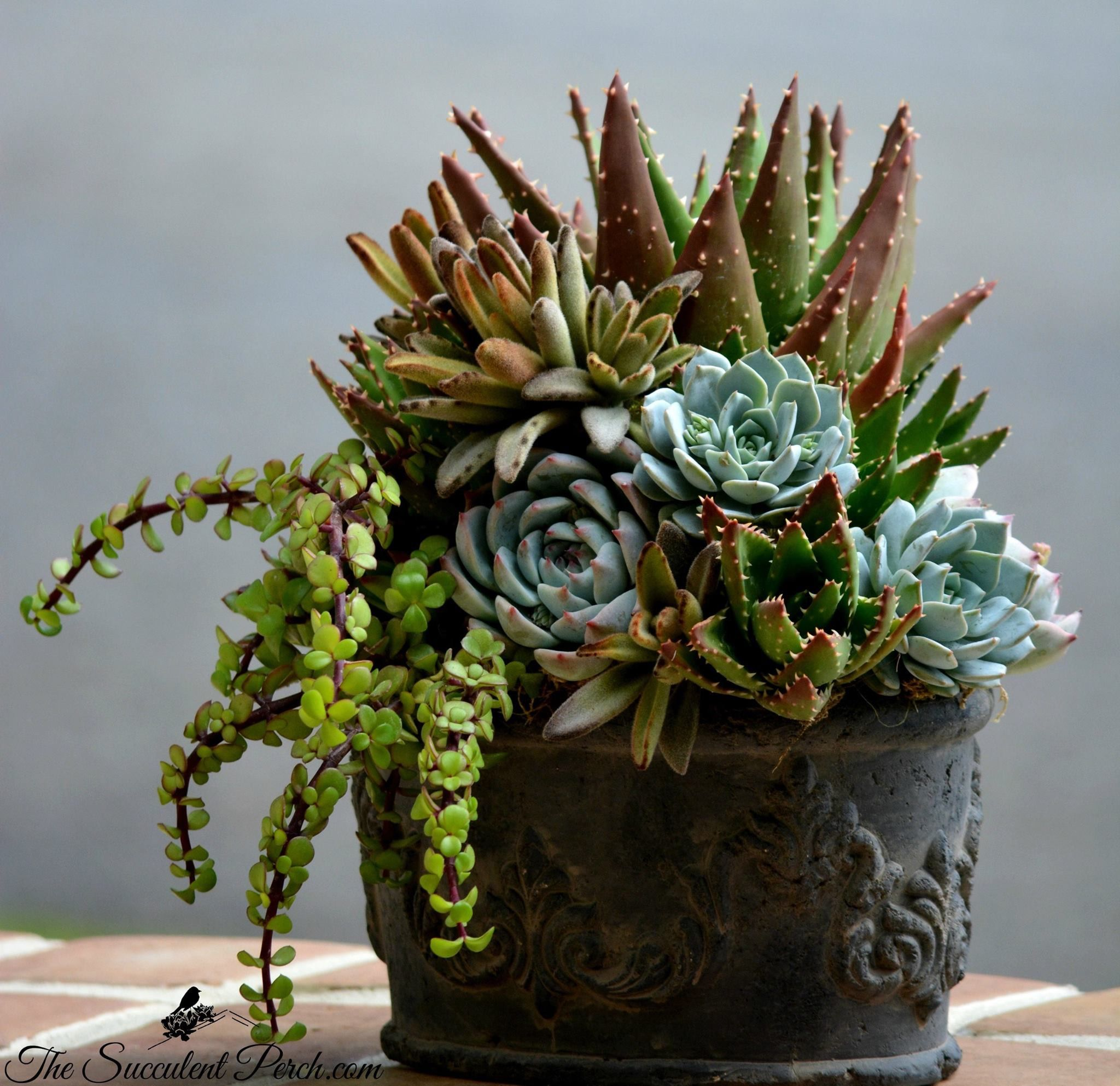 Designing With Shades Of Browns And Blues Designphoto The Succulent