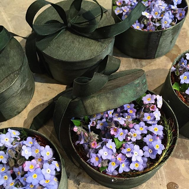 Need that perfect little present for your loved one? Get a box of forget-me-nots! A classic item made in the Tage Andersen House for generations #tageandersen #copenhagen #shop #forgetmenot #flowers #perfectpresent: