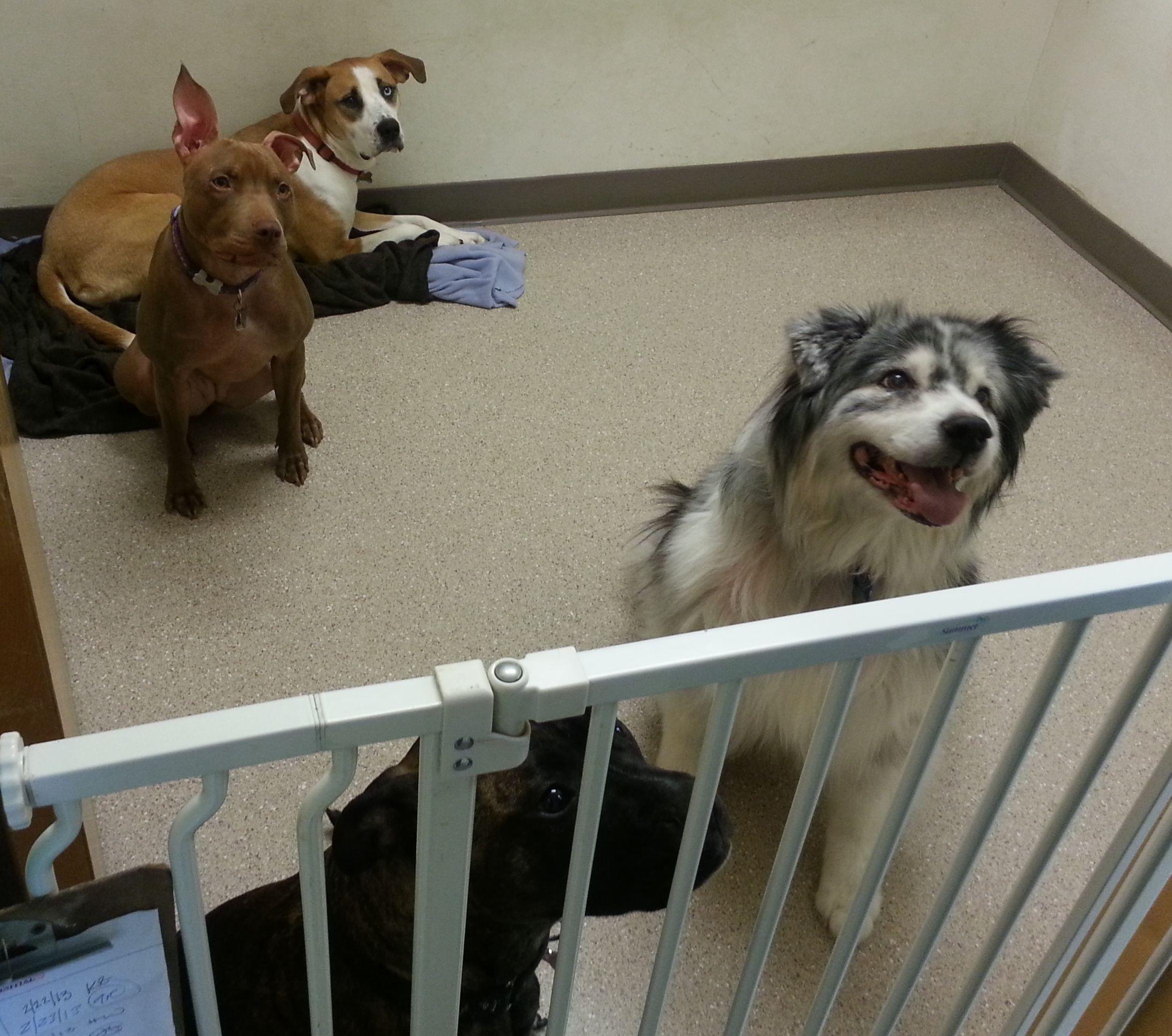 Employee Pets! Pets, Dogs, Animals
