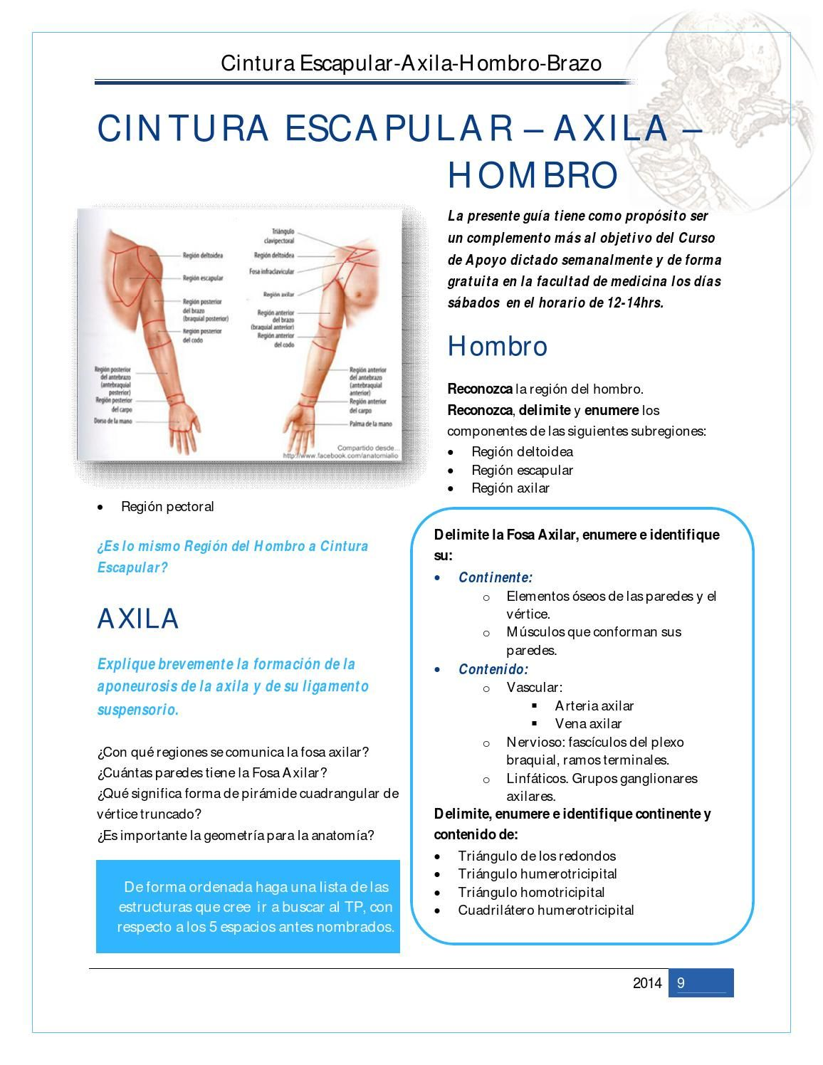 2TP Hombro/Brazo/Codo- Cat1 | ANATOMIA | Pinterest | Brazos y Anatomía