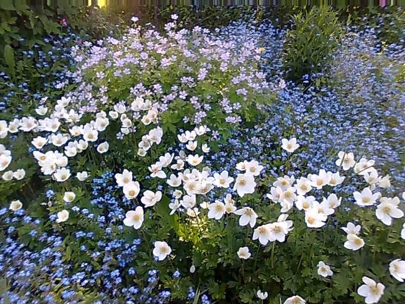 oma puutarha