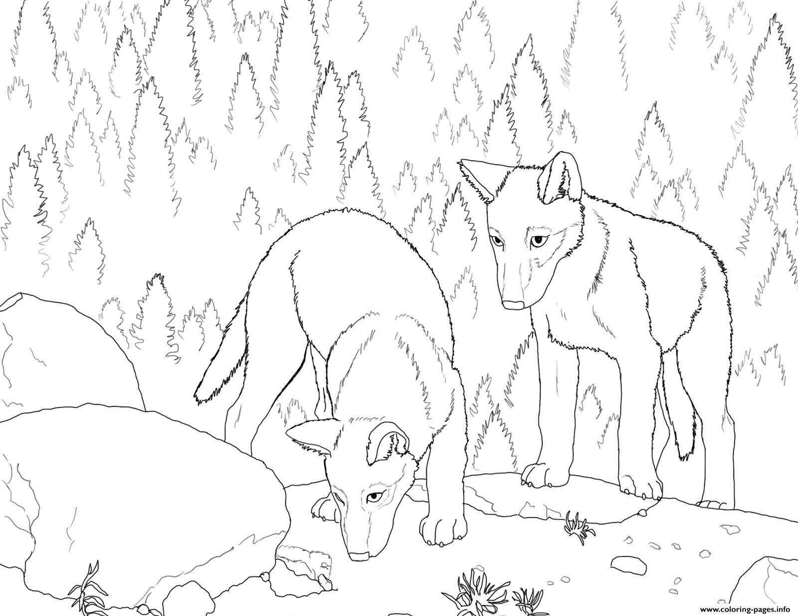 Print Wolf S Pup Coloring Pages