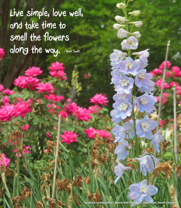 Joy Is Free! Inspirational Quotes With My Personal Photos