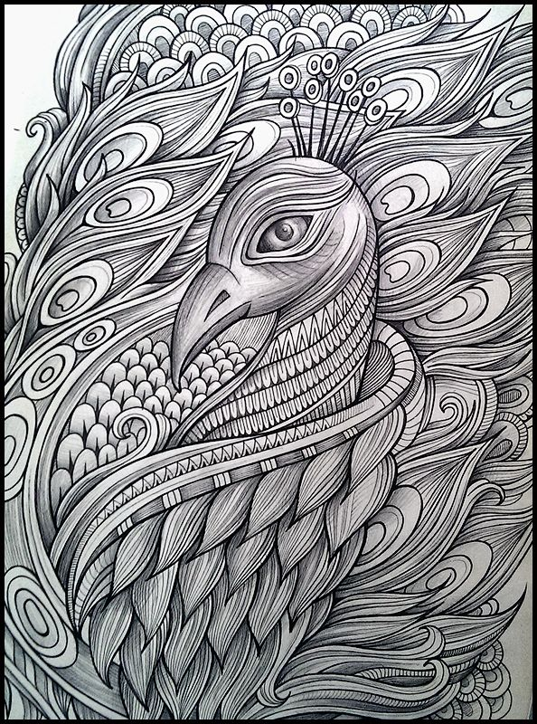 Hand drawn peacock, computer color art   TinyHouse   Pinterest ...