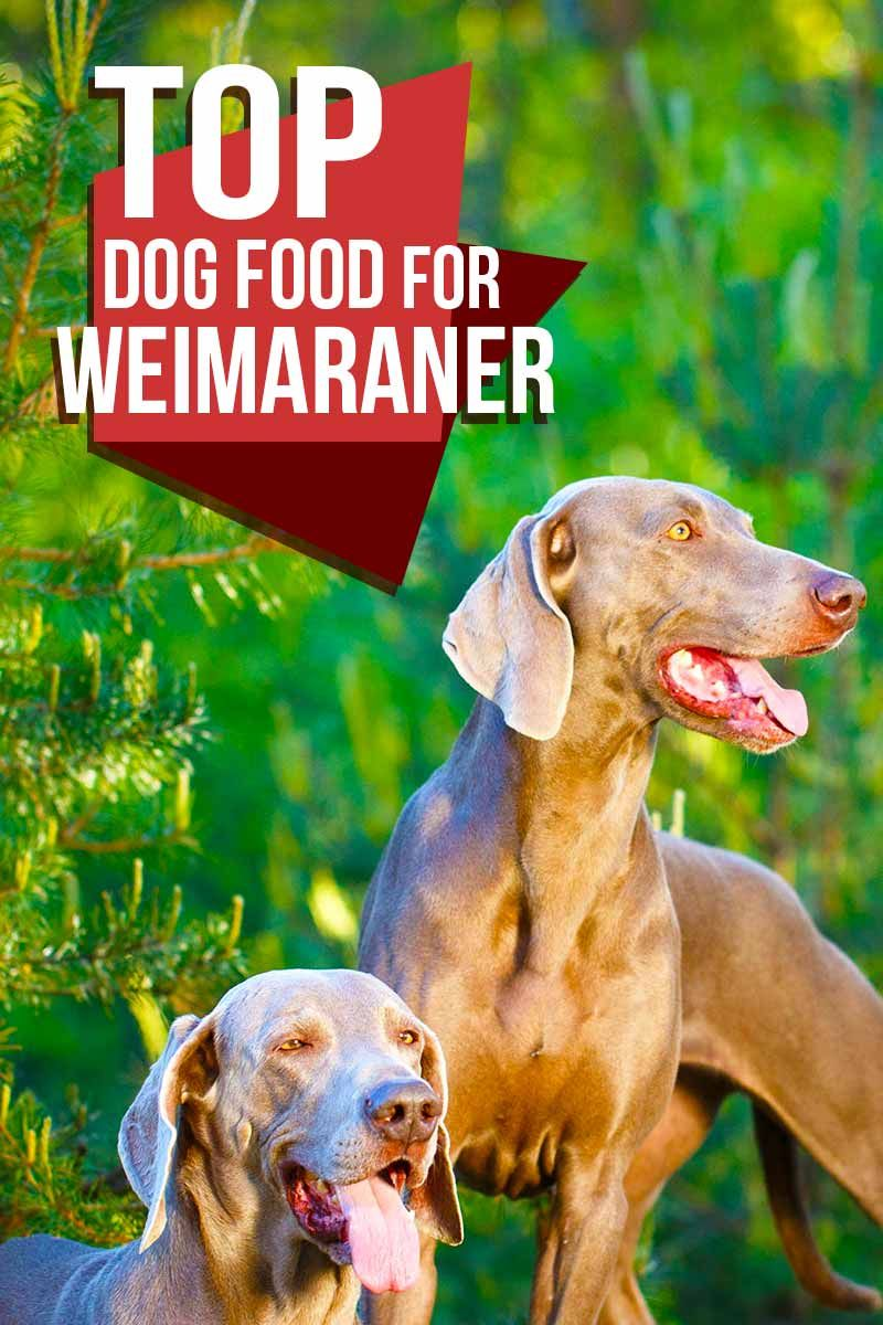 Best Dog Food For Weimaraner Puppies Adults And Seniors