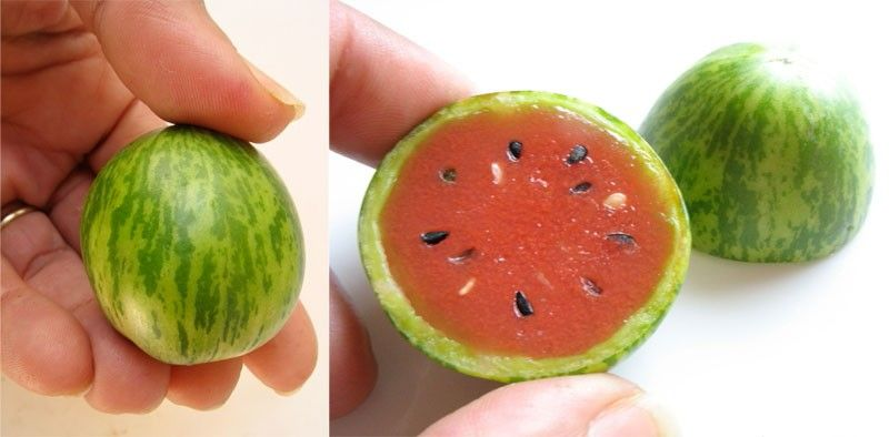 Adorable Baby Watermelon
