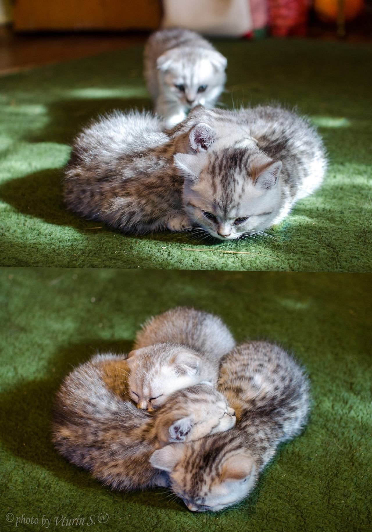 Mostlycatsmostly Kittens Cutest Cats Baby Animals