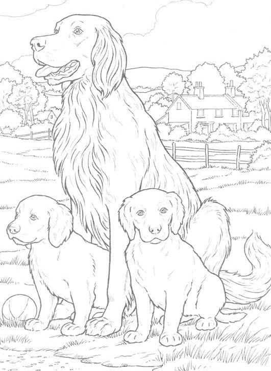 Chien Et Chiots Dog Coloring Page Animal Coloring Pages Animal Coloring Books