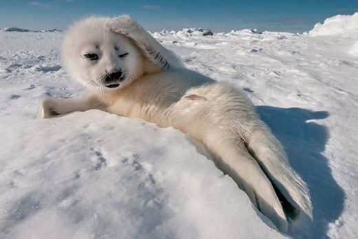 Cute seal baby