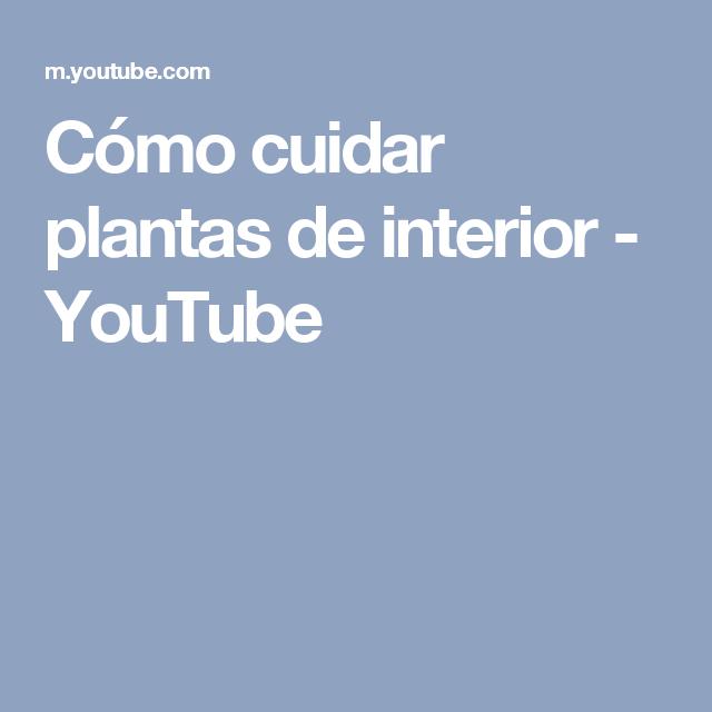 Cómo cuidar plantas de interior - YouTube
