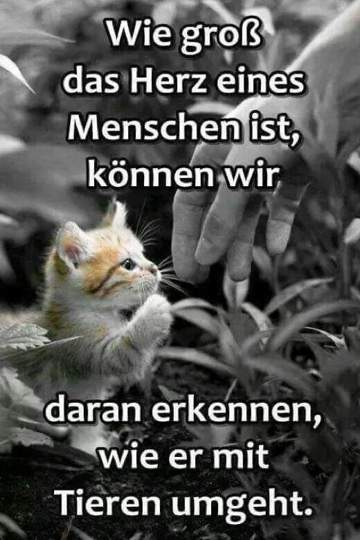 Sprüche #funnycatshirts