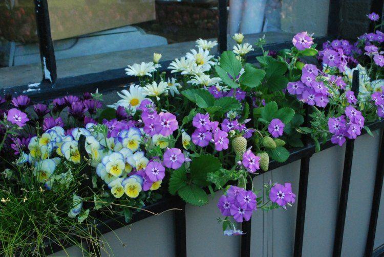 Blumen Arrangement Im Blumenkasten - Erdbeeren Mit Flammenblumen ... Blumen Arrangement Im Blumenkasten Ideen