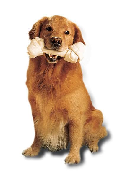 Golden Retriever With A Bone Golden Retriever Puppy Time Dogs