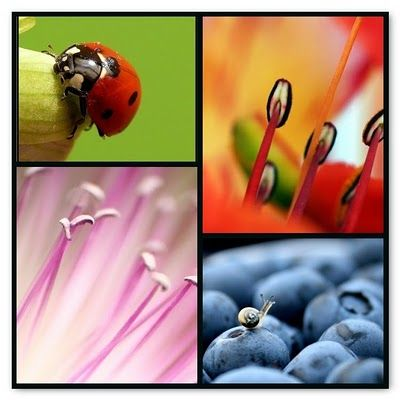 Macro images