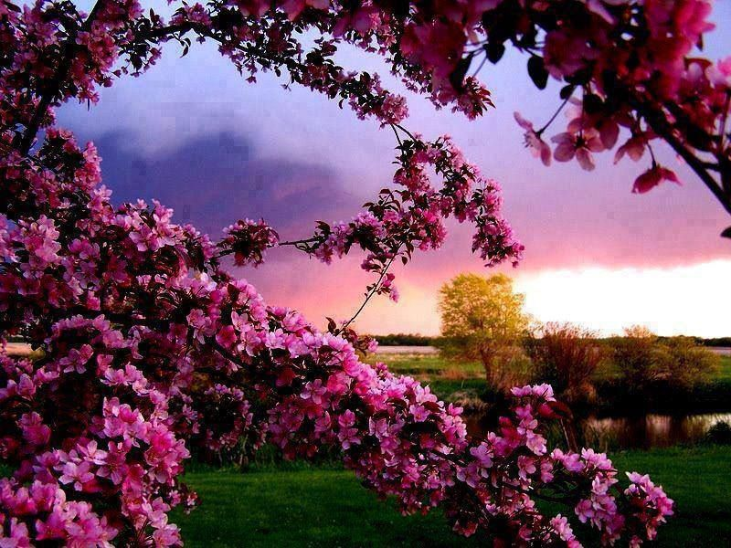 flowers to post on facebook amazingflowerswallpapers