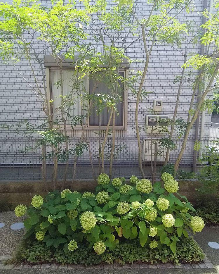 """Photo of koichi ida on Instagram: """"以前庭のリフォームさせていただいたお客様宅にて。 玄関開けたらこれ。  アジサイ・アナベルが毎年よく咲いてくれてます。 冬になったらアジサイは無くなりますが、株周りに#スノードロップ、奥に#レンテンローズ を植えてるので、花が順に咲きます。 そういう工夫、すごく好きなのです^^…"""""""
