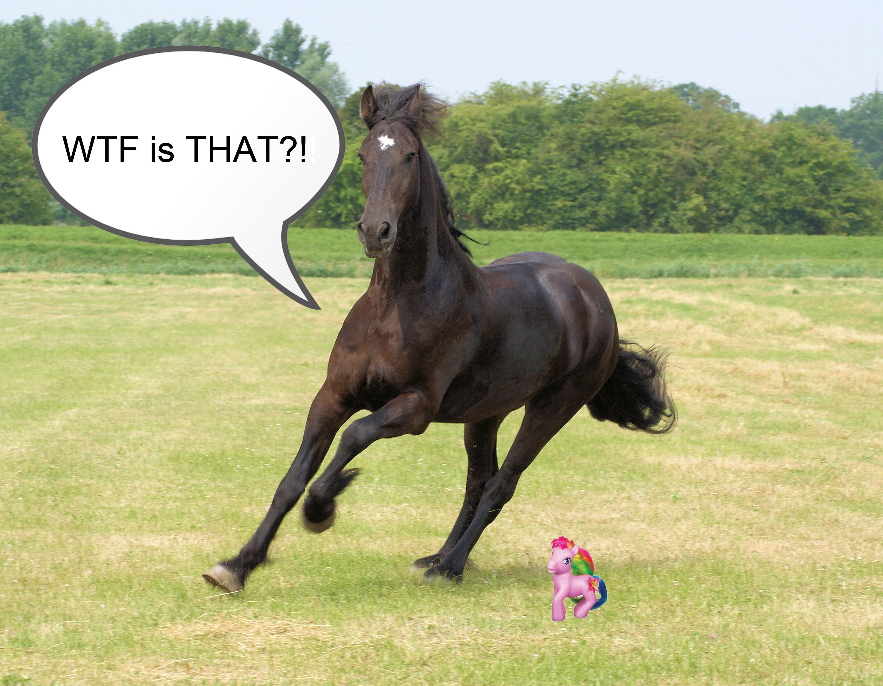 funny horse pictures - HD2965×2304