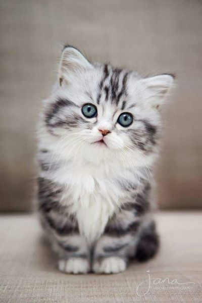Click for more funny Videos & photos Follow 미미 ♡.cat.today  ————–…