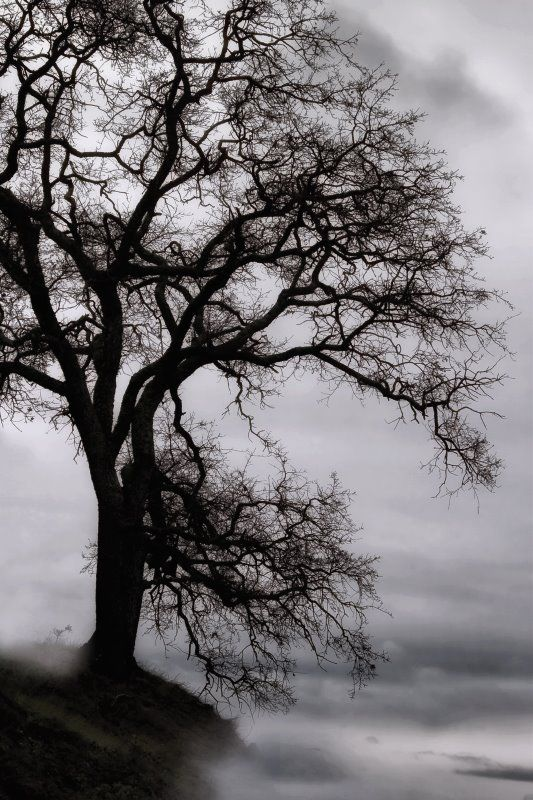 Vincent James: Tree in the Sky