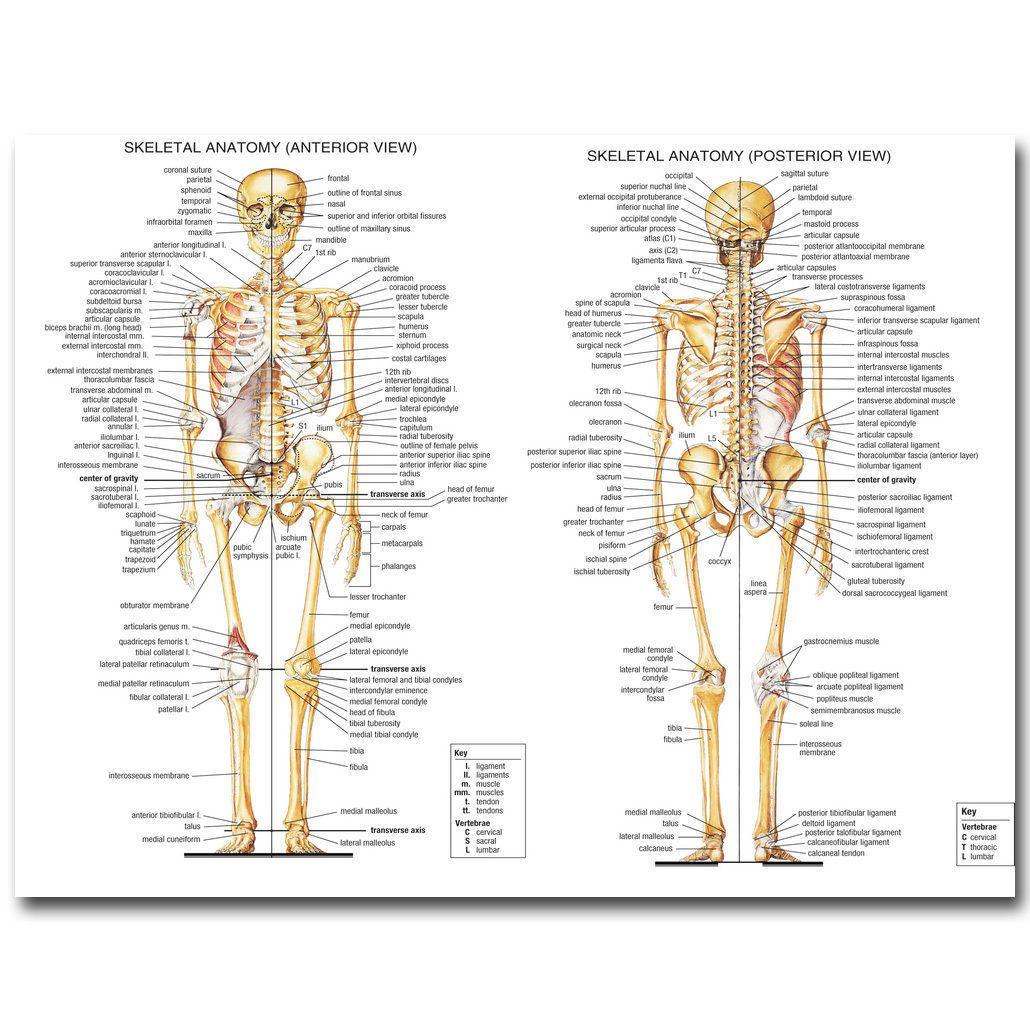 Art Human Anatomy Skeletal System Medical Education Wall Fabric