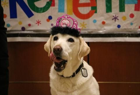 Airport Honors Longtime Service Dog With The Perfect Retirement
