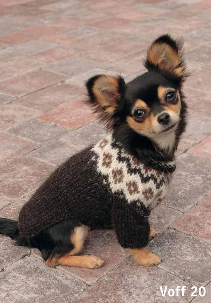 for your dog http://nammi.is/voff-sweater-for-dog-p-3406.html ...