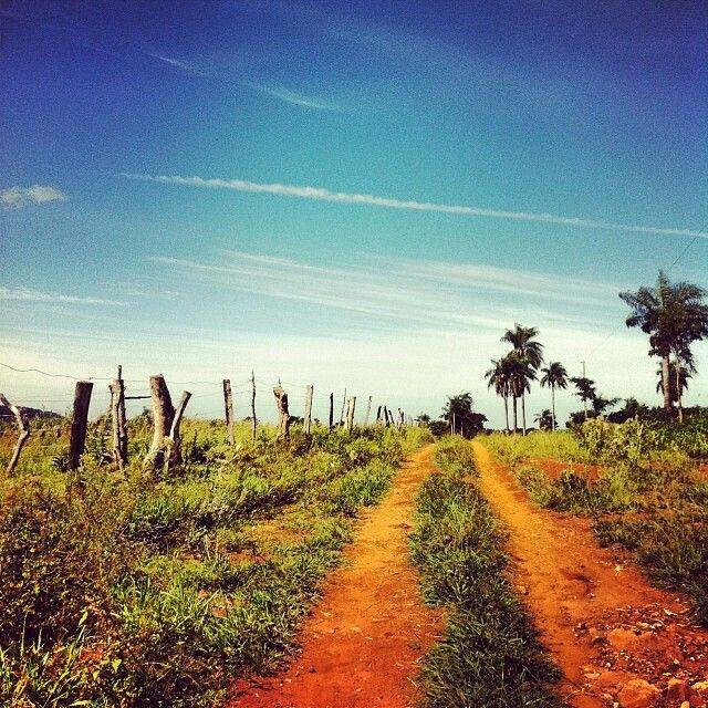 Caminos llenos de vida #compo #agricultor #Agronomia