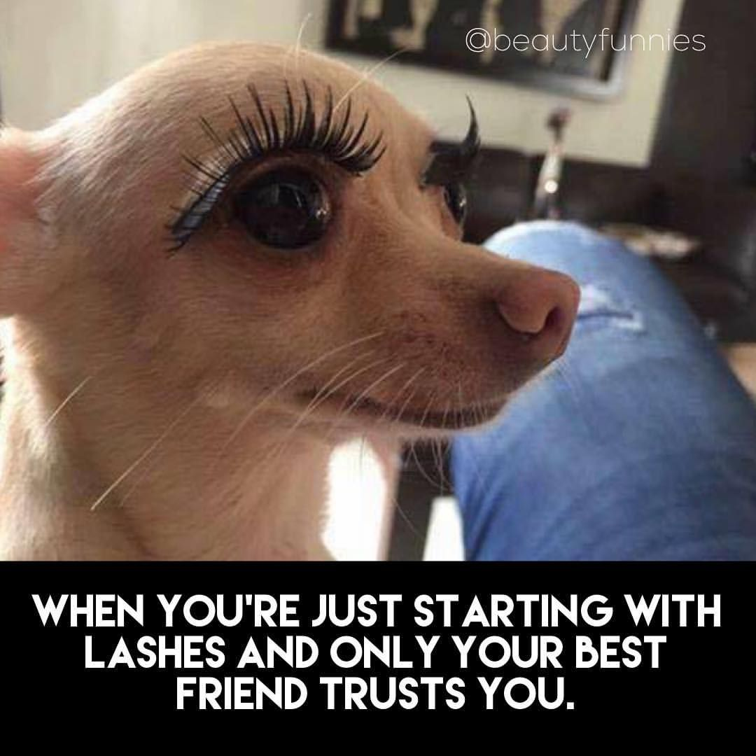 Thanks To All My Friends Who Let Me Do Their Lashes At First Lash Artist Funny Meme Artist Humor Lashes Best Lashes