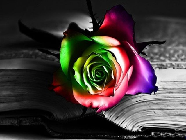 Explore Colorful Roses Rose Wallpaper And More