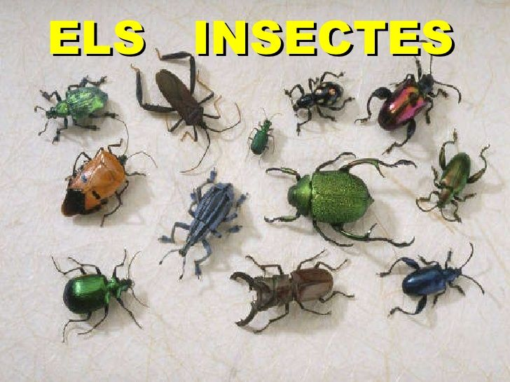 Els Insectes (Primaria) by Eduardo CONNOLLY via slideshare