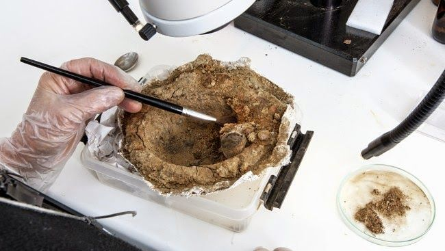 Remains of a leather purse were found inside the shield boss [Credit: Åge Hojem/ NTNU Museum of Natural History and Archaeology]  Read more at: http://archaeologynewsnetwork.blogspot.de/2015/02/islamic-coins-found-in-viking-grave.html#.VOx36nZFHII