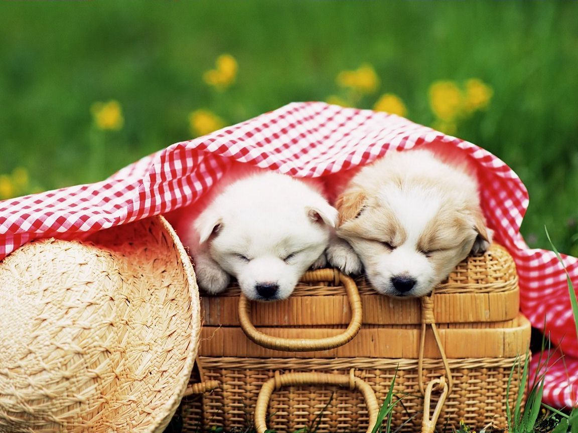 I Cant Help But Love This Picture Puppies Funny Cute Dogs Images Cute Dog Wallpaper