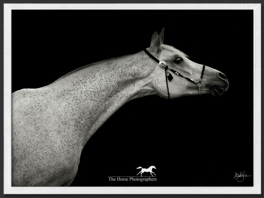Arabian beauty.  Love this.