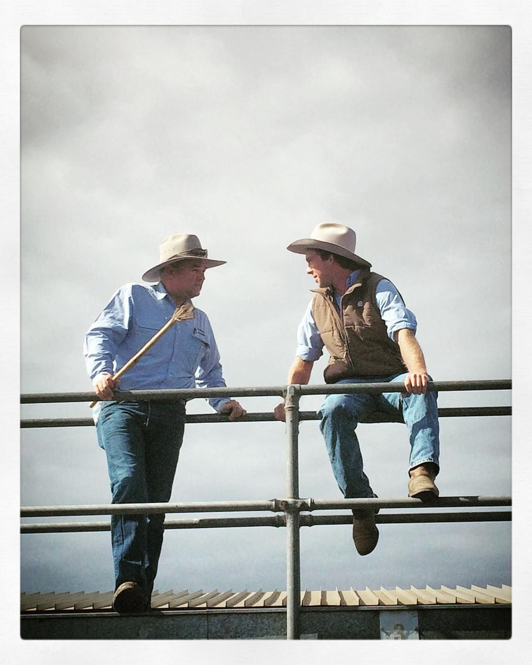 Stock agent talk saleyards cattle Australia
