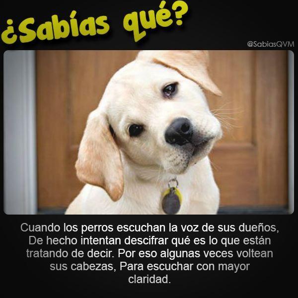 Pin De Avelines Maisonet En Wow Perros Frases Amantes De Perros Perros Tiernos Animados