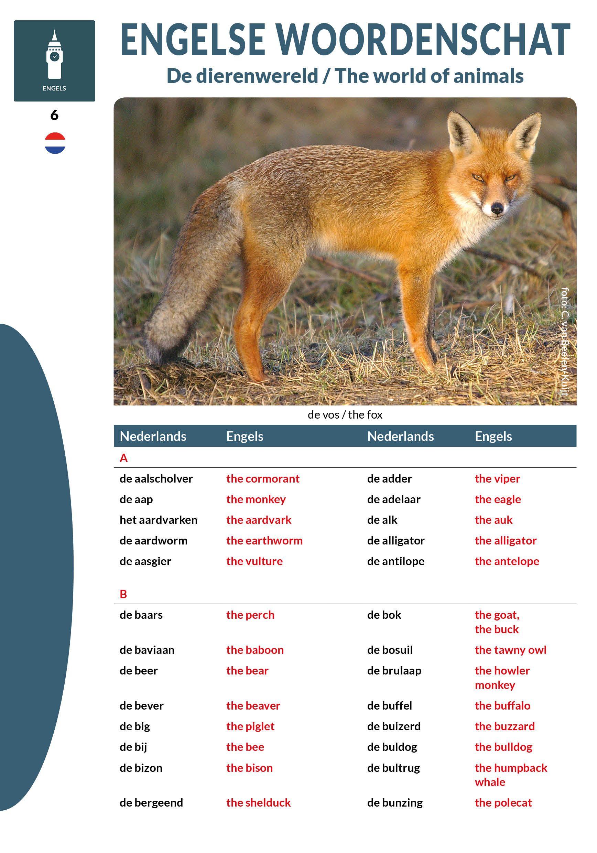 Engelse woordenschat De dierenwereld Engel, Engels