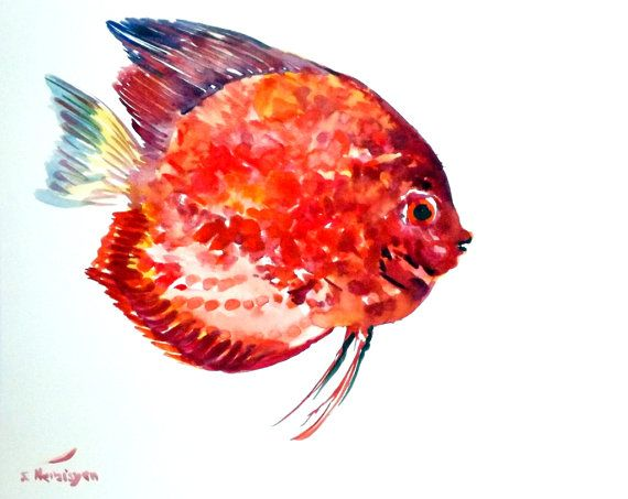 Red Discus Original Watercolor Painting 8 X 10 In By Originalonly
