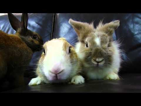 the House Rabbit Society - Links to rabbit care, health, vets, and adoptions! <3