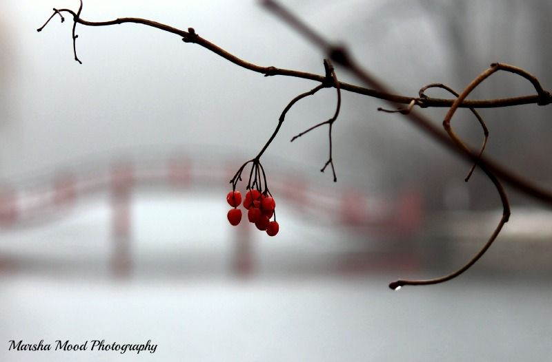 Berries in the fog...........