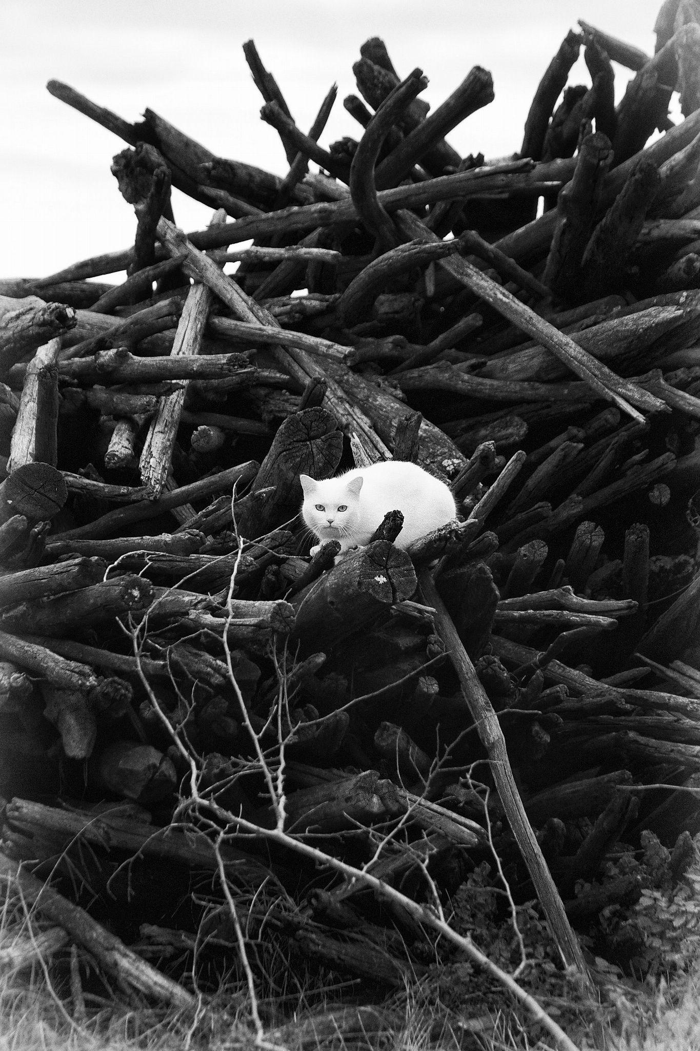 Photo mr. White on a Black mass by Lorenzo ROSIGNOLI on 500px