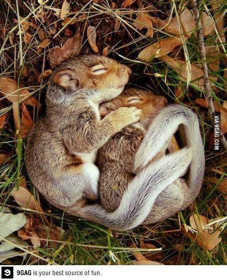 sweeties - real love :)