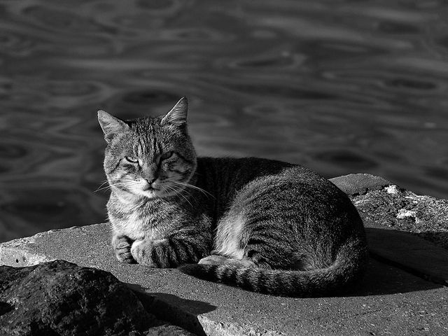 Animals in Porto, Portugal (animais) - a photo by loreen